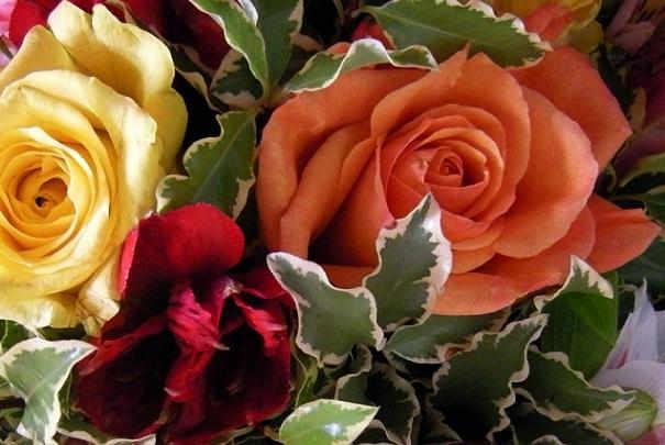 enlever_epines_tige_rose_pour_bouquet