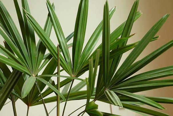 Conserver les plantes d int rieur pendant les vacances for Plantes d interieures