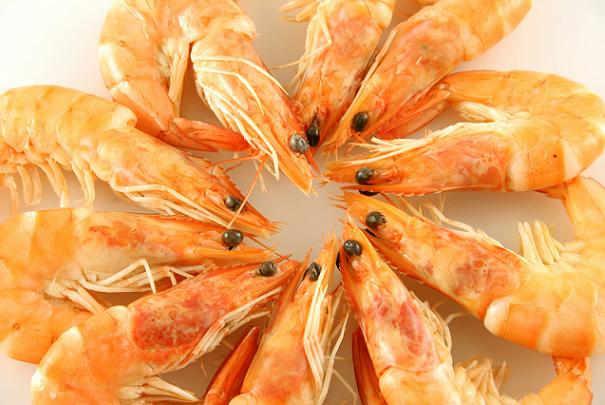 Circle of Shrimp