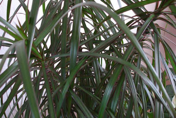 Nourrir les plantes vertes d int rieur for Les plantes vertes