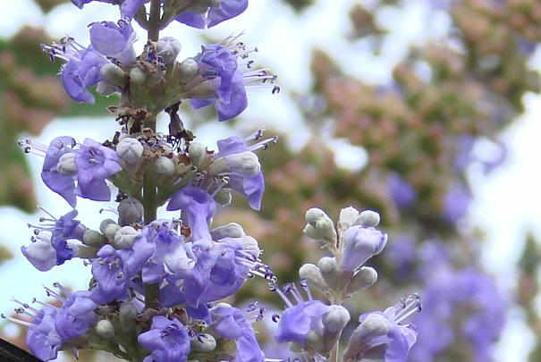 plantes_medicinales_bien_etre_feminin