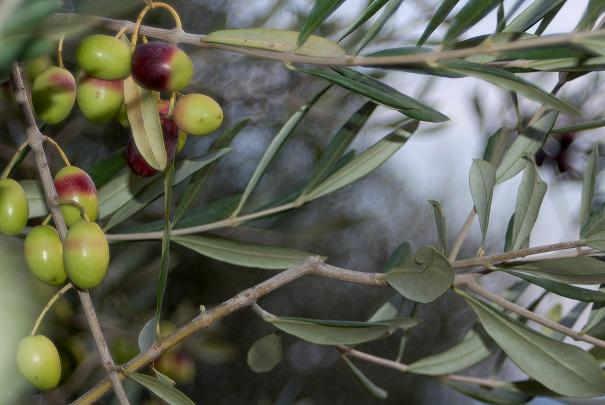 plantes_medicinales_pour_bonne_circulation