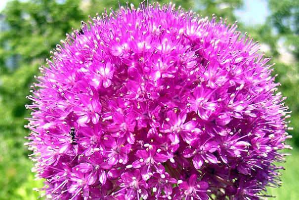 plantes_medicinales_trouble_circulation