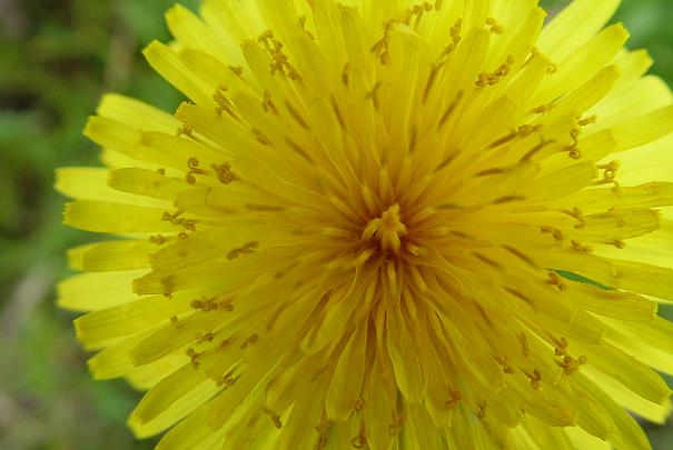 plantes_medicinales_trouble_digestion