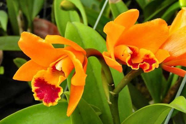 Comment éviter aux jeunes enfants de toucher à la terre des pots de fleurs ?