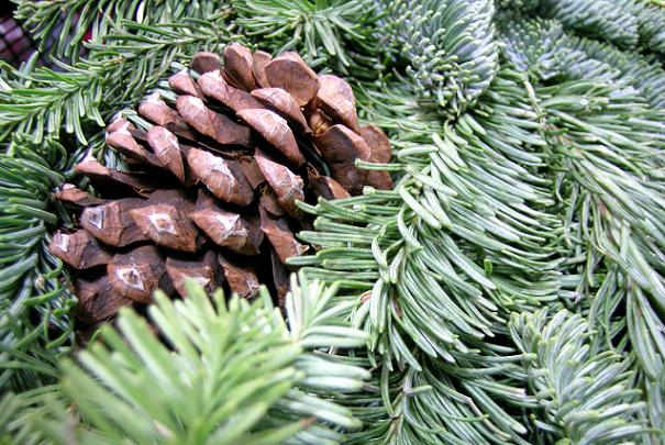 point_recyclage_sapin_noel_paris