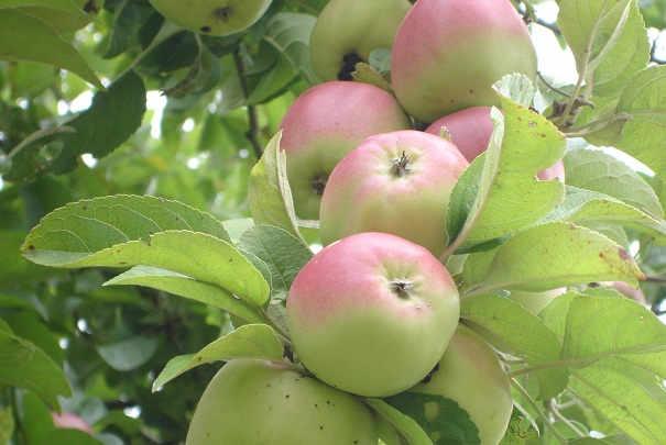 hausse_prix_fruits_legumes_2010