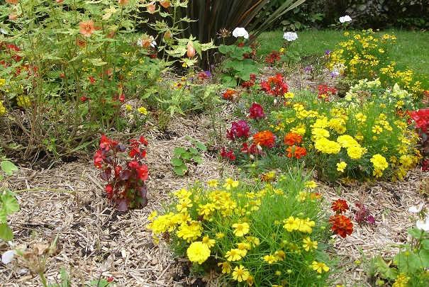 paillage_plantes_utilites
