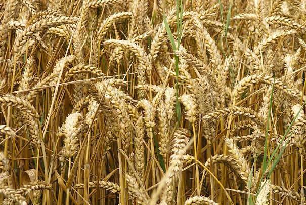 indice_des_prix_achat_des_moyens_de_production_agricole