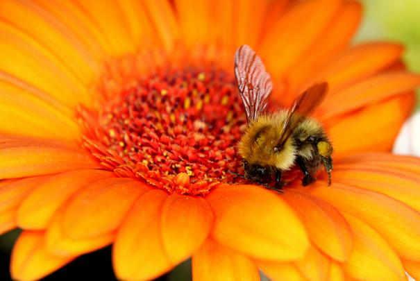 Soulager une piqûre d'abeille ou de taon