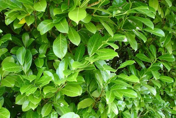 Favoriser la croissance des plantes