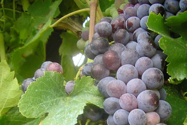 Salons des vins des vignerons ind pendants hiver 2011 - Salon des vignerons independants lille ...