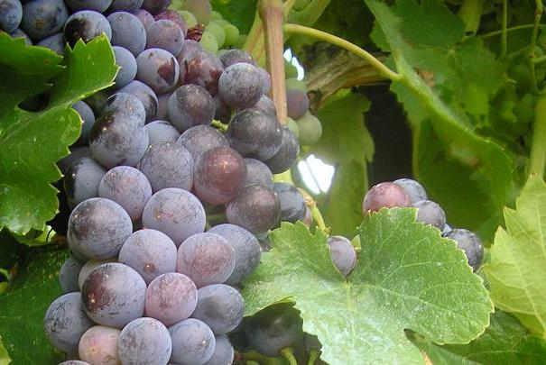 La consommation de vin en France a atteint 28 millions d'hectolitres en 2013