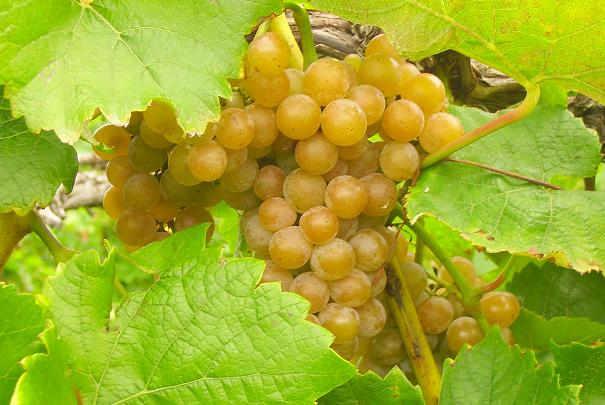 Salons des vins des vignerons ind pendants hiver printemps - Salon des vignerons independants strasbourg ...