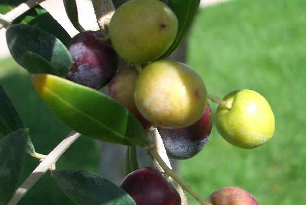 Les avantages santé des huiles végétales